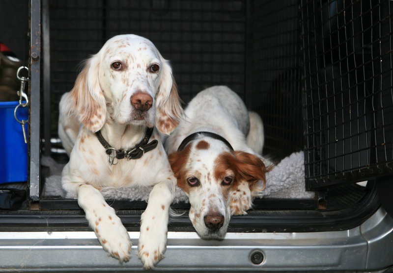 Hunde in Auto Transportbox